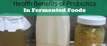 Health Benefits Of Probiotics In Fermented Foods
